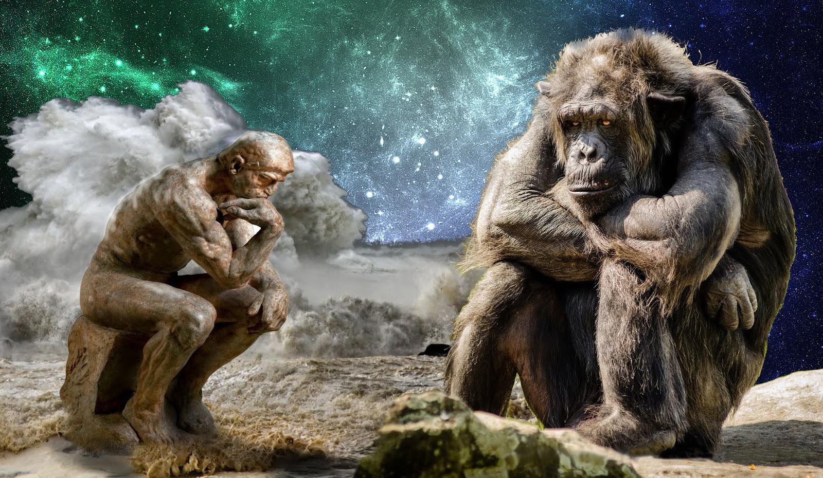 scimmia-sapienslr